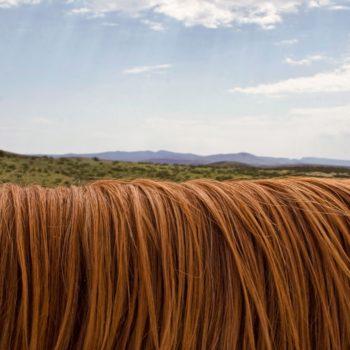 horse-hair-mattress