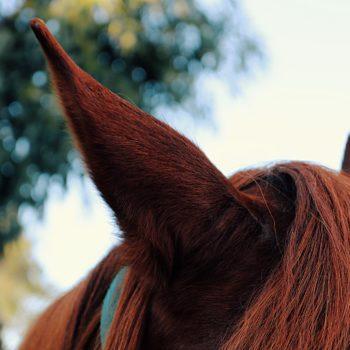 horse-hair