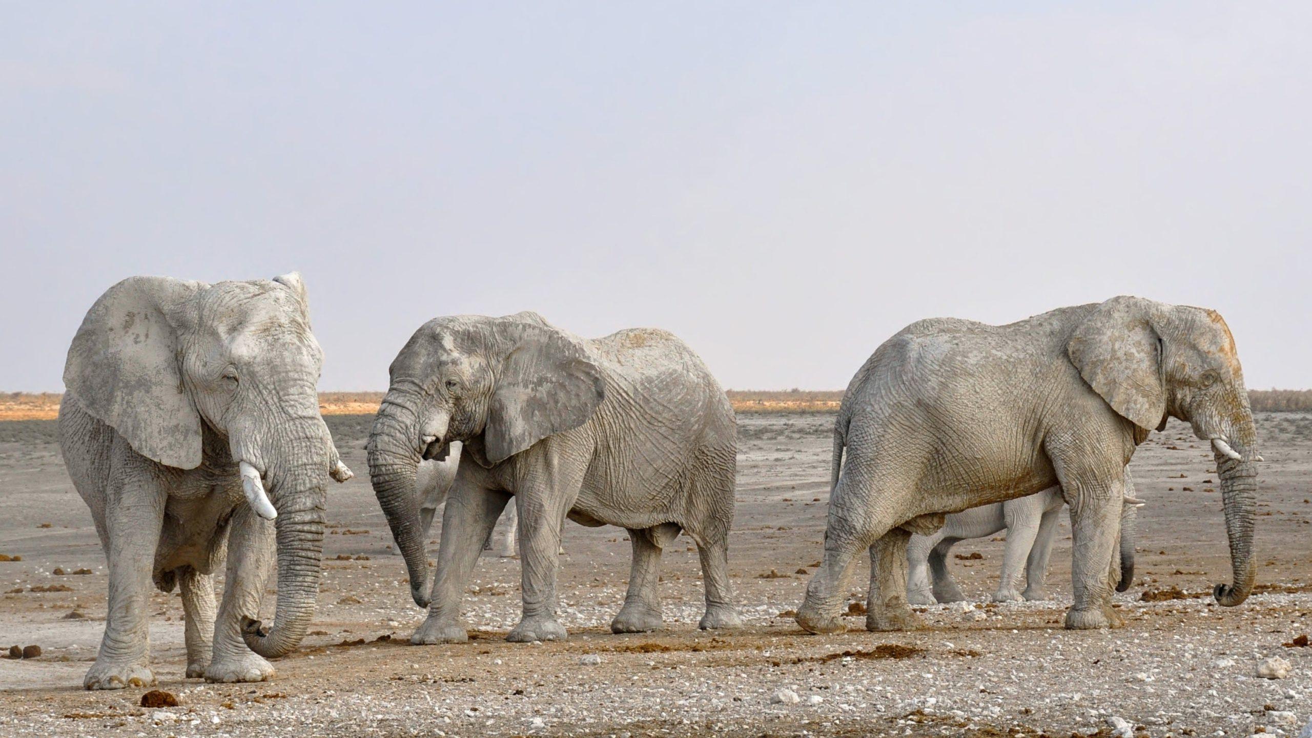 national-elephant-day-Ely
